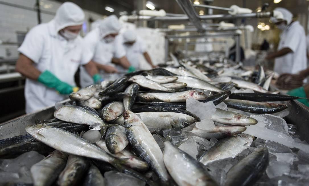 Entre a isca e o anzol: mercado pesqueiro cresce e vira foco no Congresso Nacional